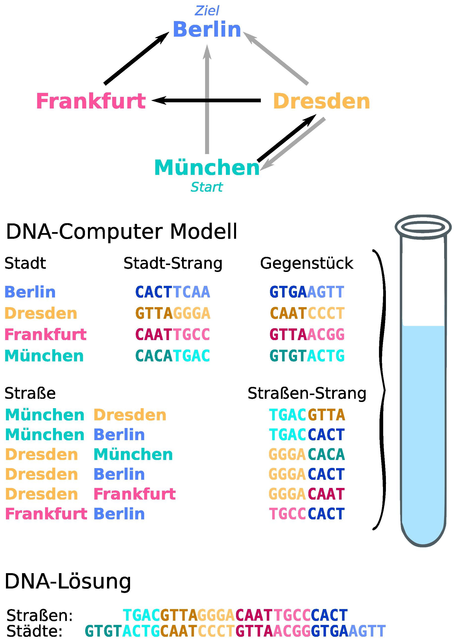 DNA-Computer Modell nach dem Prinzip von Adleman für das Hamiltonpfad-Problem mit vier Städten.
